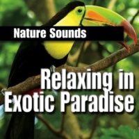 Nature Sounds Jungle Downpour