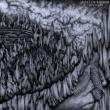 Falls of Rauros Vigilance Perennial