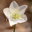 Various Artists El Sonido De La Primavera