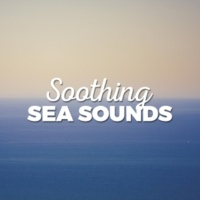 Beach Waves Specialists Ocean Surf Sounds