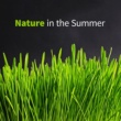 Soothing Sounds Nature in the Summer