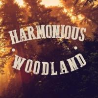 Forest Soundscapes Harmonious Woodland