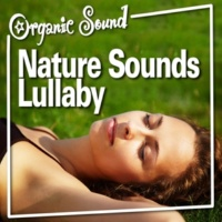 Organic Sound Nature Sounds Lullaby
