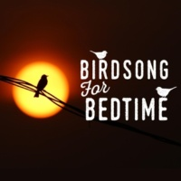 Nature Sounds Nature Music Birdsong for Bedtime