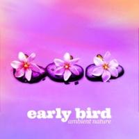 Calm Bird Sounds Early Bird: Ambient Nature