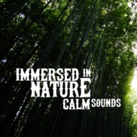 Deep Sleep Nature Sounds Immersed in Nature: Calm Sounds