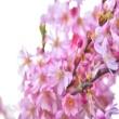 Guitarplus Pink Flowers