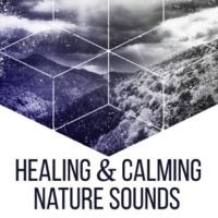 Echoes of Nature Healing & Calming Nature Sounds ‐ Music to Rest, New Age Relaxation, Focus on Nature, Stress Free
