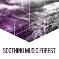 Sounds of Nature Soothing Music Forest ‐ Nature Sounds for Relaxation, Classical Guitar, Birds Singing, Soft Melodies, Pure Mind, Sounds of Forest, Deep Sleep