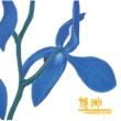 姫神 青い花