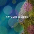 Mindfulness Oefeningen & Ontspanning En Meditatie Voor Mij & Ontspanning Sound Geluiden Van de Natuur - Heerlijke Ontspannende Achtergrondmuziek