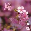 小林進 桜