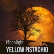 Yellow Pistachio Moonlight