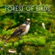 Bird Sounds Forest of Birds ‐ Nature Sounds for Relaxation, Meditation Music, Singing Birds, Soft Music, Pure Mind, Music for Rest, Nature Sounds