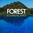 Forest Soundscapes Evening Song