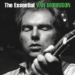 Van Morrison Wild Night