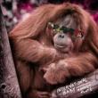 International Baby Monkey Flute (Radio Edit)