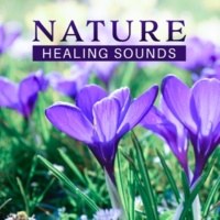 Nature Sounds Relaxation: Music for Sleep, Meditation, Massage Therapy, Spa Chilling Flow