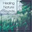 Echoes of Nature Healing Nature Sounds ‐ Soothing Nature Music, Waves of Calmness, Zen Garden, New Age Relaxation