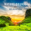 Nature Sounds for Sleep and Relaxation, Relaxation And Meditation Nature Sounds for Relaxation ‐ Soft Music to Rest, Deep Sleep, Pure Mind, Relax, Meditation, Soothing Rain, Gentle Wind