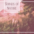 Native American Flute Sounds of Nature ‐ Relaxing Music, Nature Sounds, Relief Stress, Reduce Anxiety, Rest, Instrumental New Age