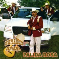 Inseparables De Sinaloa Palida Rosa