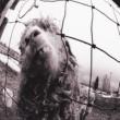 Pearl Jam Leash (Remastered)