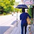 野村麻紀 マキのよさこい節