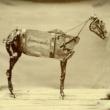 Chadwick Stokes The Horse Comanche