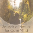 The Calming Sounds Of Nature