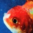 ヴィンス・ステイプルス Big Fish Theory
