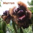 GUMI Marron
