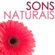 Sono Profundo Sons Naturais - Paisagens Sonora para Sono Profundo, Cura Vibracional con Sons da Natureza