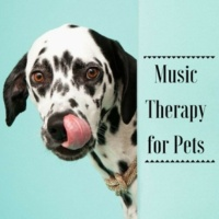 Pet Therapy Music Zone Tender & Peaceful (Meditation Zen Sound)