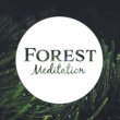 Japanese Relaxation and Meditation Forest Meditation - Sounds of Nature, Meditate in Peace, Mind Journey, Body Rest
