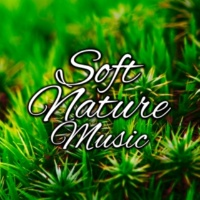 Rest & Relax Nature Sounds Artists Drizzle Outside