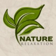 Bird Sounds Nature Relaxation - Music to Calm Down, Soft Sounds of Nature, Walk in the Forest
