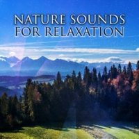 Calming Sounds Nature Note