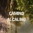 Silvina Romero Camino Alcalino