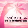 Naturaleza Música de la Naturaleza - Bosque y Rio, Sonidos Naturales para Perfecto Equilibrio Entre Cuerpo y Mente
