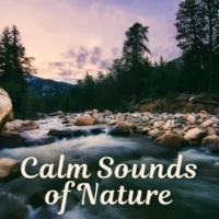 Calming Water Consort Positive Vibes