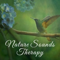 Life Sounds Nature Sounds of Birds