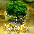 Nature Sounds Nature Relaxation Melodies - Easy Listening, Soothing Sounds, Peaceful Nature Sounds, Waves to Calm Down