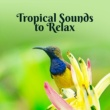 Positive Vibrations Collection Tropical Sounds to Relax - Chill Out Beats, Tropical Island Rest, Music to Relax, Easy Listening