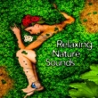 Sounds of Nature Relaxation Relaxing Nature Sounds - Soft Music to Calm Down, Easy Listening, New Age Nature Melodies, Quiet Sounds
