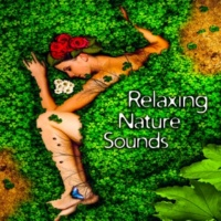 Sounds of Nature Relaxation Calm Night
