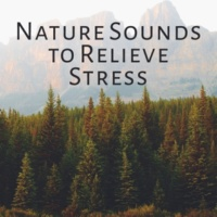 Nature Tribe Instrumental Nature Sounds