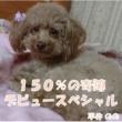 平井のの 150%の奇跡 デビュースペシャル