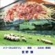 宮野徹 メリーさんのひつじ(ロック) ‐ 緊張 ‐ 幻の光(新録2017)