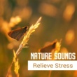 White Noise Therapy Ambient Sounds